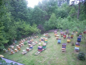 Poradnik dom i ogród