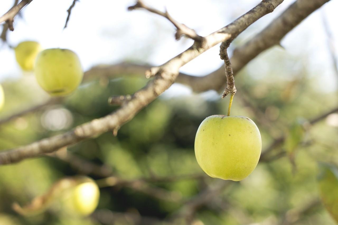 Ocet jabłkowy i jego prozdrowotne właściwości