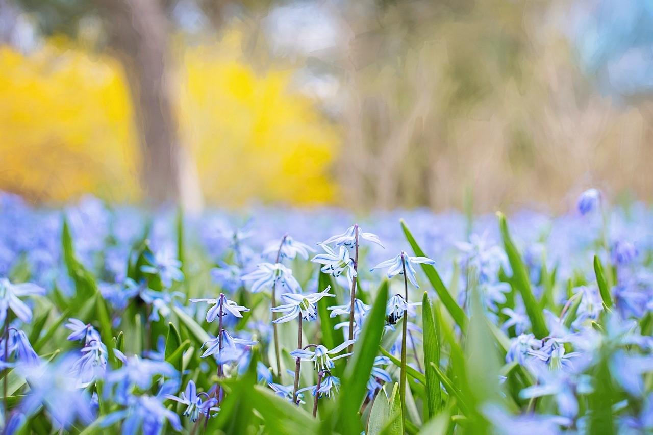 spring-flowers-741965_1280
