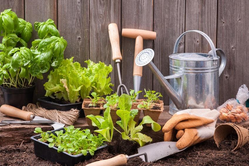 ABC ogrodnika, czyli najważniejsze narzędzia do pielęgnacji działki