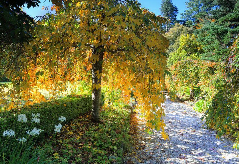 Liściaste Drzewa Ozdobne Do Ogrodu Które Wybrać