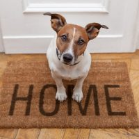 Pies wnaszym domu – jak się przygotować ico wiedzieć